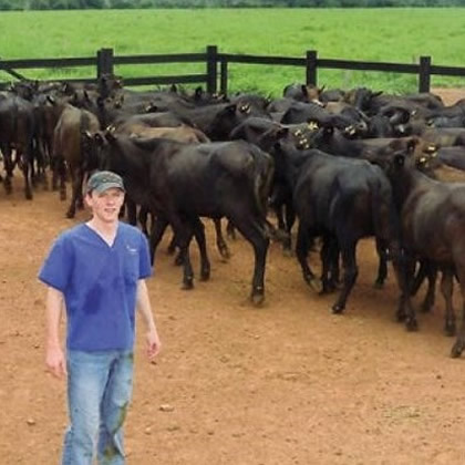 Student Of Ky Pholer Working With Cattle In Brazil Web